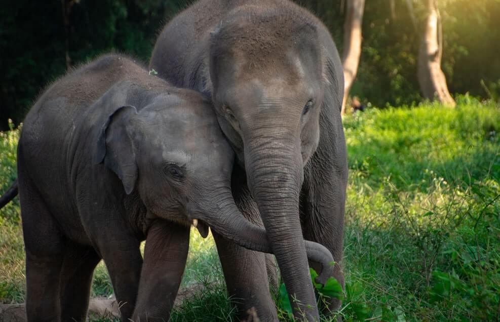 Gallery elephant nature park