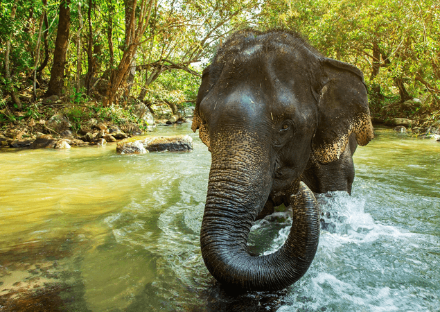 Thailand Elephant - The Care Project Foundation