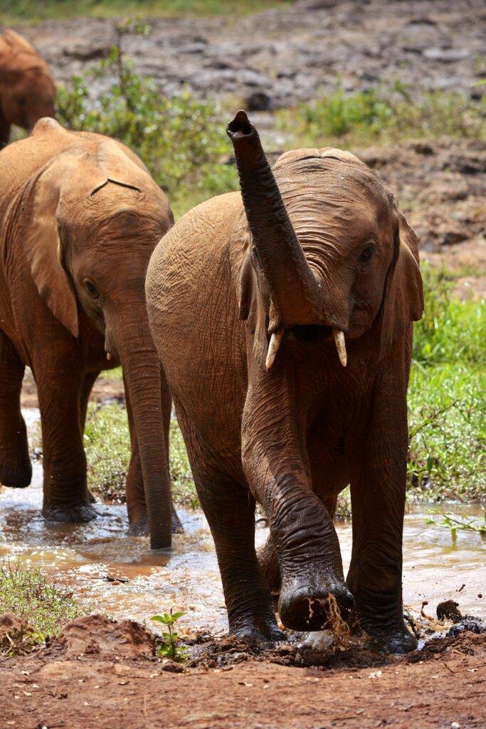 Elephants in Chiangmai - Thailand elephant