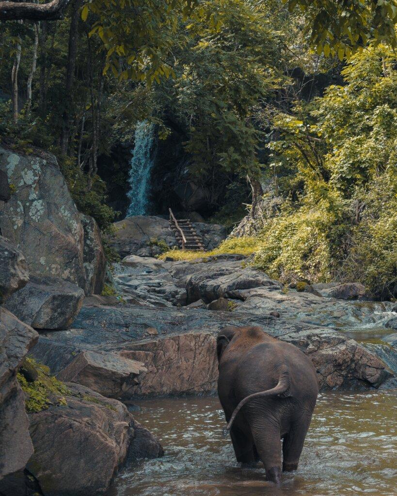 Elephants in Pattaya - Thailand elephant
