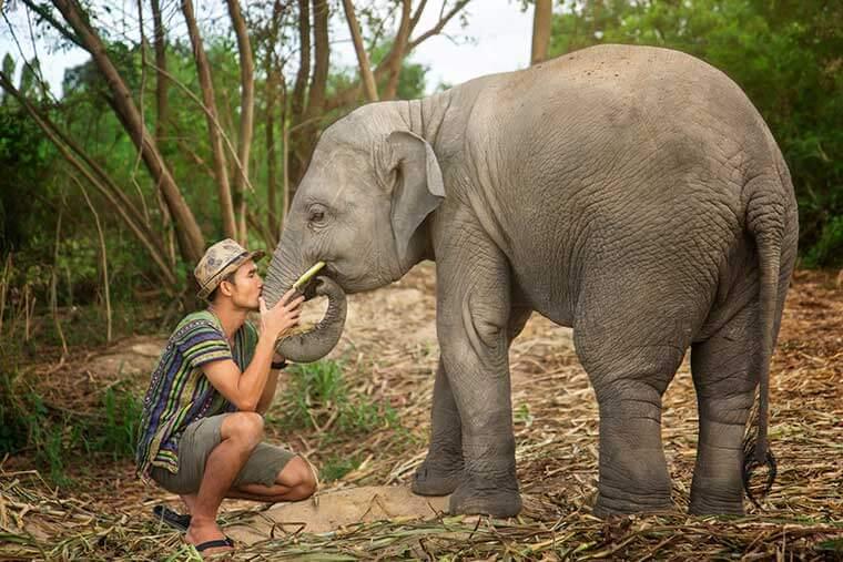 Elephant Sanctuary in Thailand